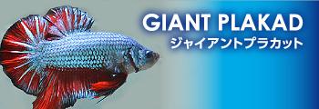 new_giantplakad